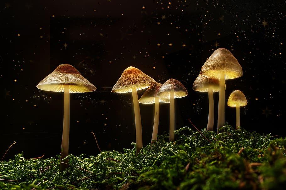 Magiczne grzyby są spożywane od wieków